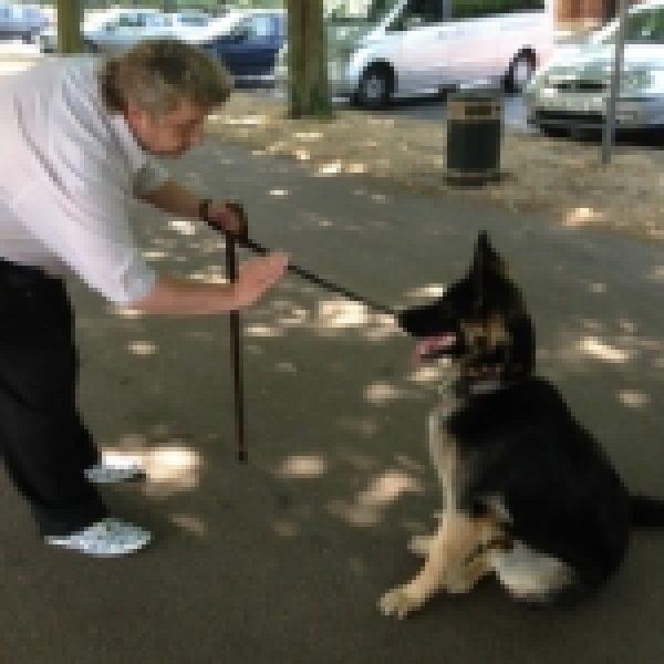 Maggie (German Shepherd)