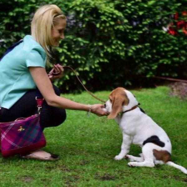 Alfie (Beagle)